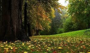 20200830154950-bosque.jpg